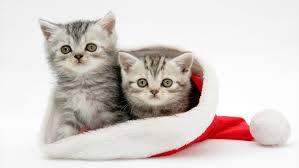 kattungar skellefteå säljes
